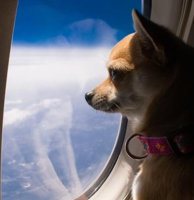 Перевозка питомцев в самолете