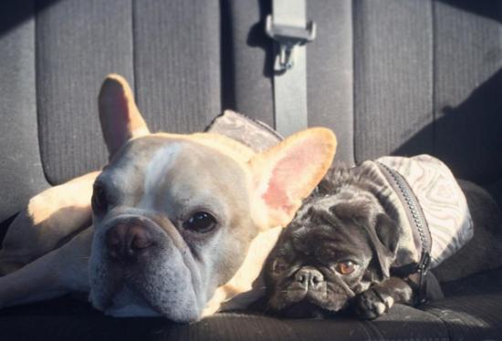 собаки в самолете
