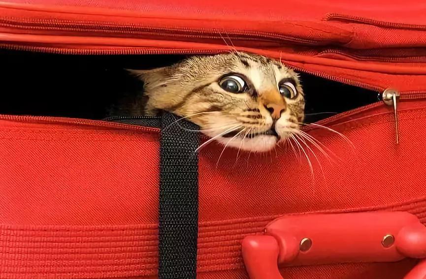 Кот в самолете прикол картинки, открытку картинки нужен